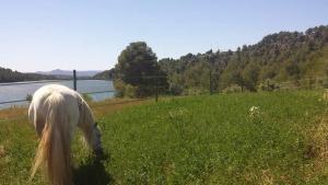 Prats de pastura